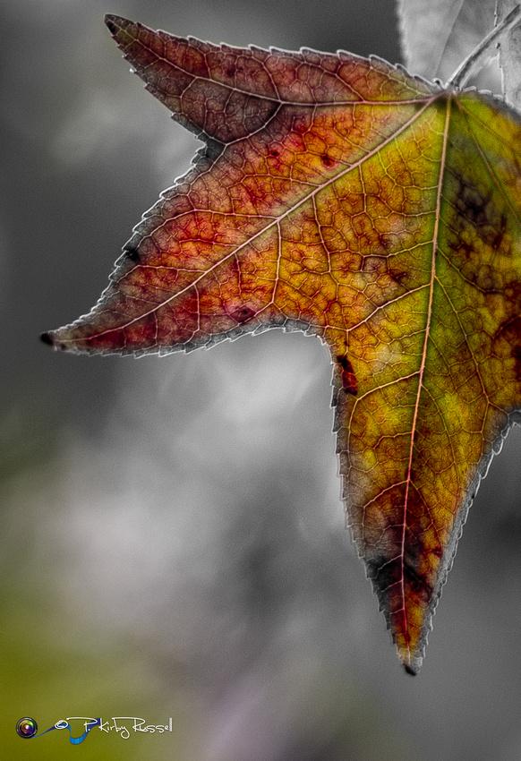 Photo-Kirby-Russell-Autumn-424626-3